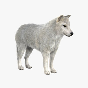 arctic wolf fur 3d model