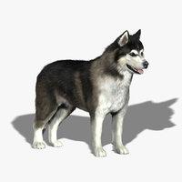 Siberian Husky (FUR)