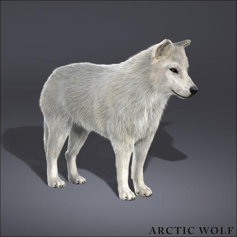 arctic wolf fur 3d model