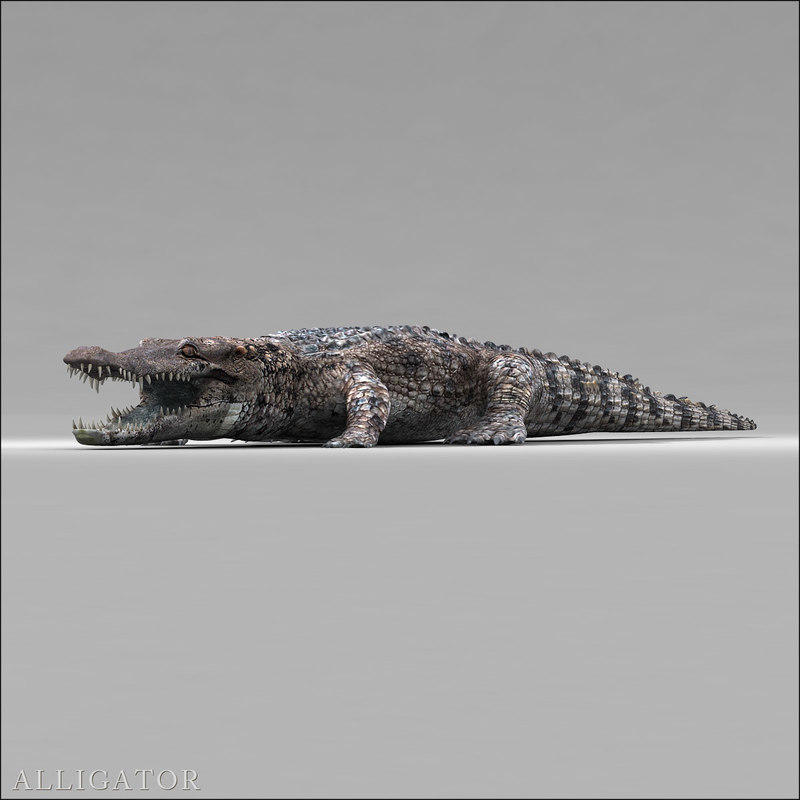 3d realistic alligator