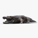 alligator 3D models