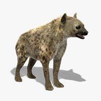 3d model of hyena shave modeled