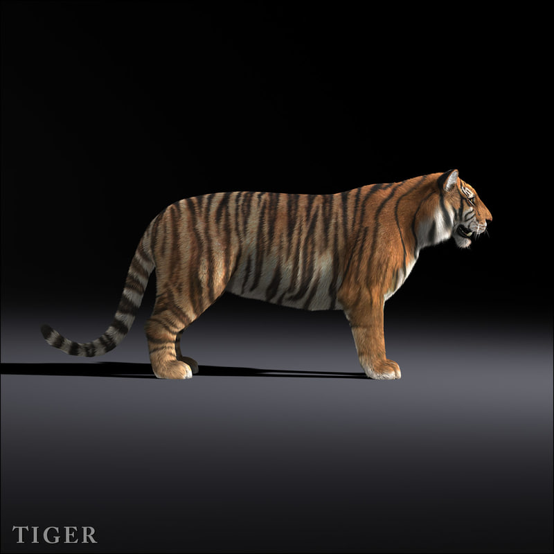 3d tiger shave haircut