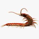 centipede 3D models