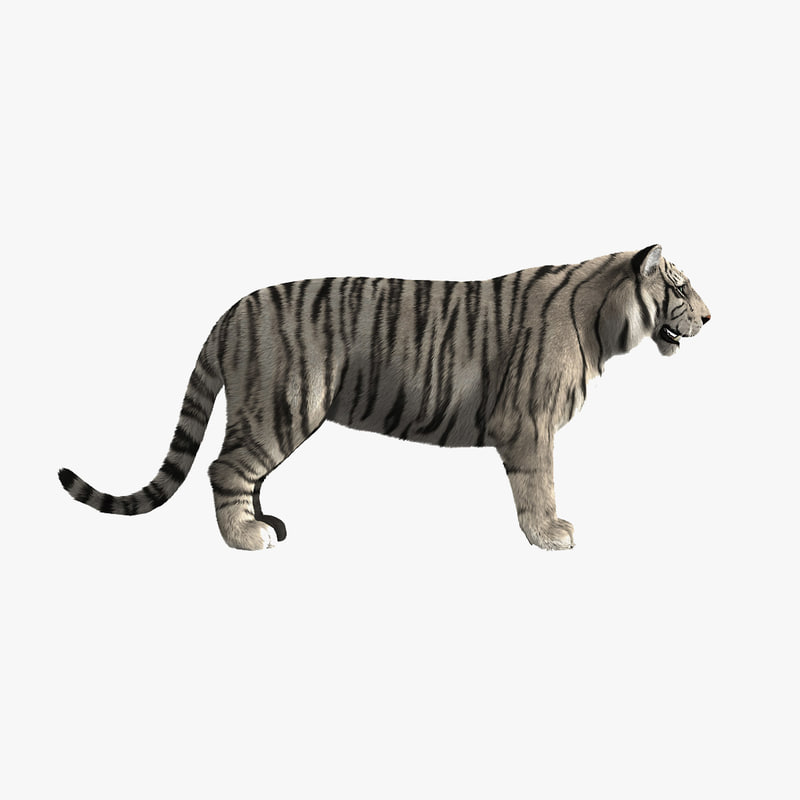 3d white tiger