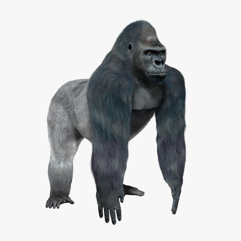gorilla fur 3d model