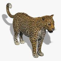 Leopard (FUR)