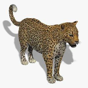leopard fur 3d model