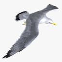 aquatic bird 3D models