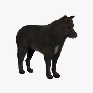black wolf fur 3d model