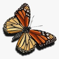 maya photorealistic monarch butterfly
