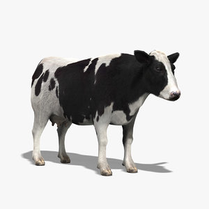 3ds max cow holstein cattle