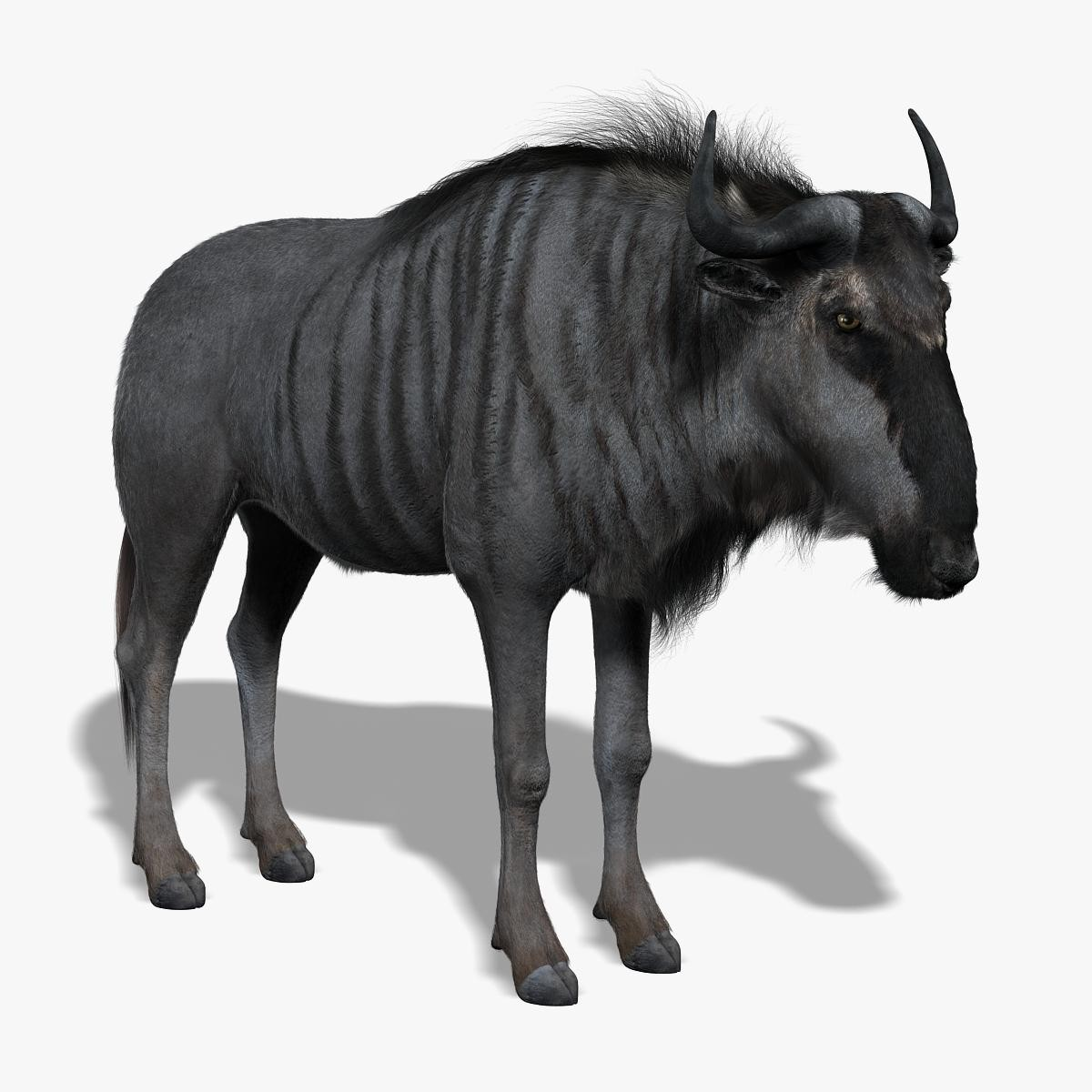 wildebeest gnu fur 3d model