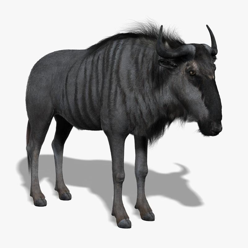 wildebeest gnu fur 3d model