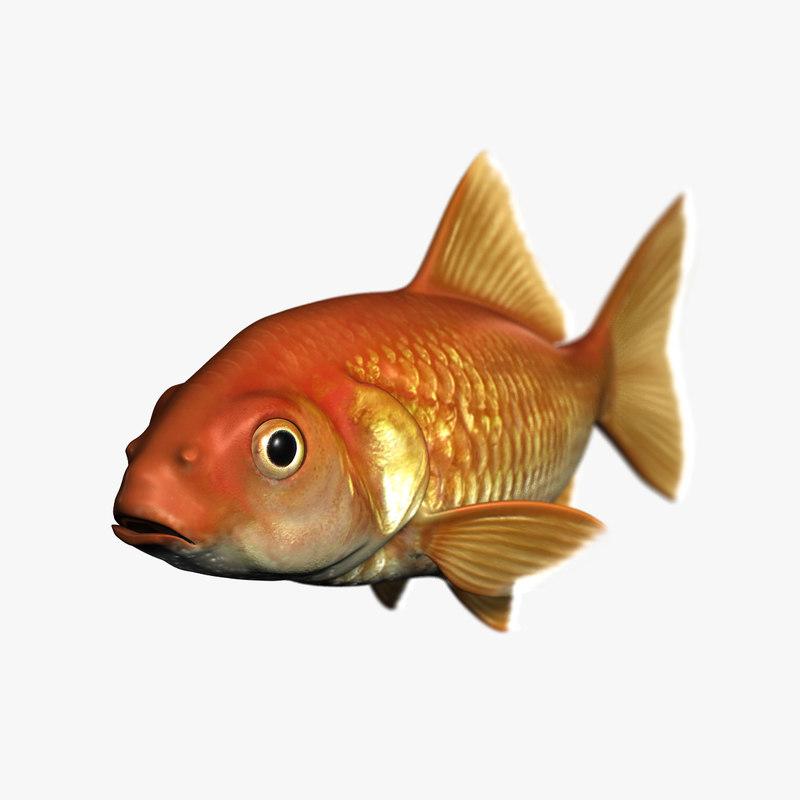 fish goldfish 3d obj
