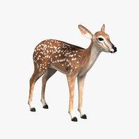 3d model fawn deer