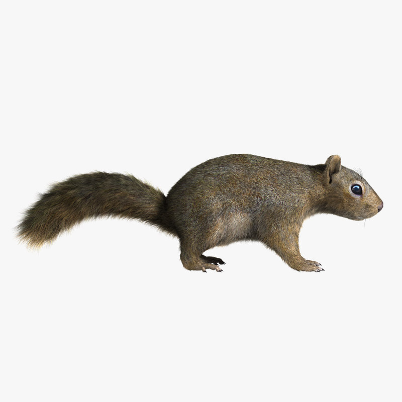 squirrel fur 3d model
