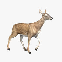 Doe (ANIMATED)