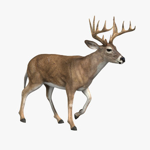 deer animation 3d model