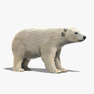 polar bear fur 3d model