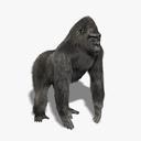 gorilla 3D models