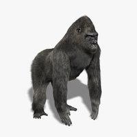 Gorilla (3) (FUR)