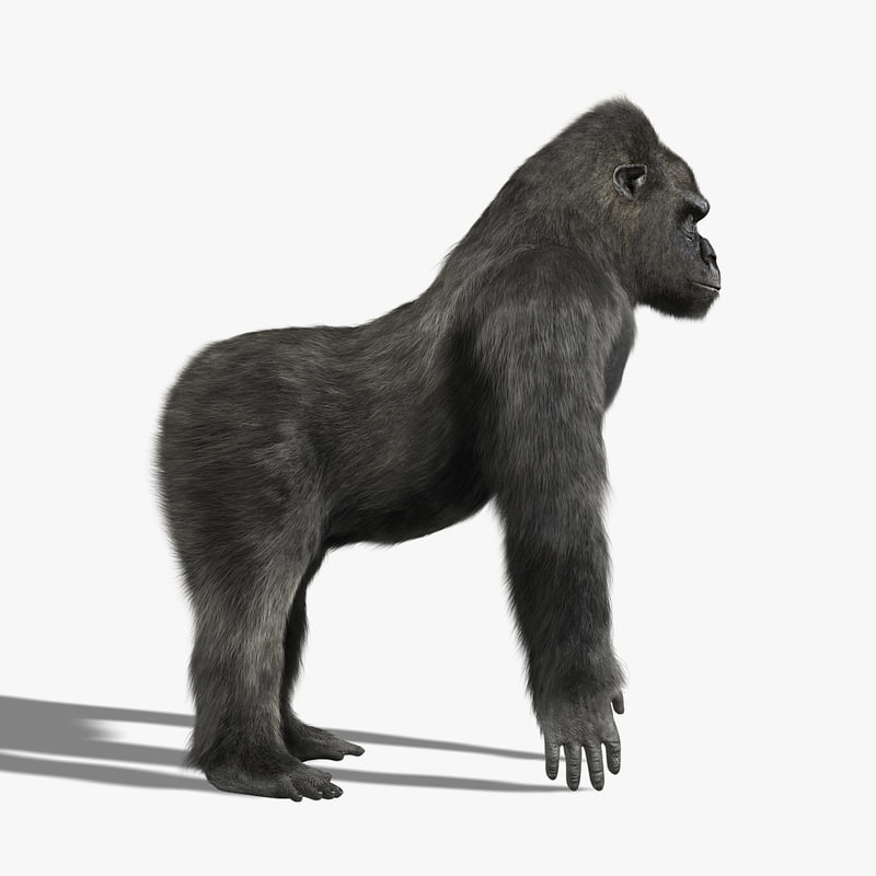 gorilla silverback fur 3 3d model