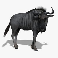 Wildebeest  (FUR) (RIGGED)