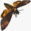 Moth 3D models