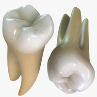 teeth molars 3d max