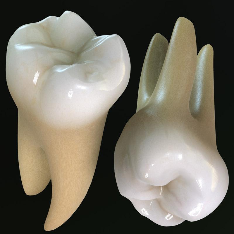 teeth molars 3d max