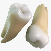 max teeth molars wisdoms