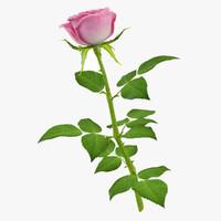 3d model rose 10