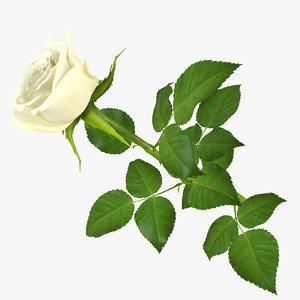 rose 14 3d model