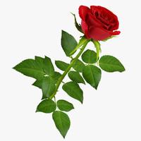 rose 9 3d model