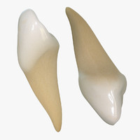 3ds max teeth canines