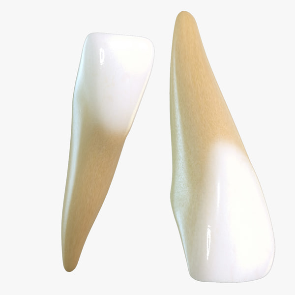 teeth central incisors max