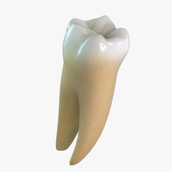 tooth lower molar 3d max