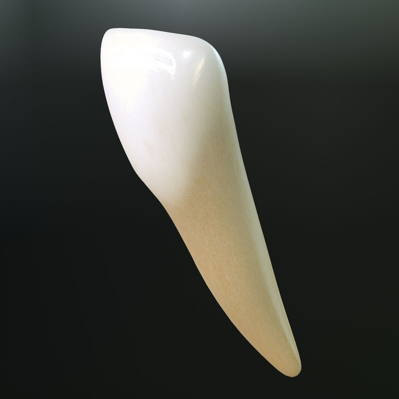 max tooth lower lateral incisor