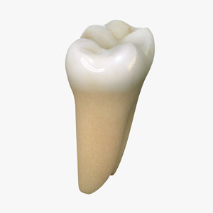 tooth lower molar max