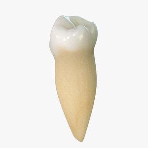 3d tooth lower premolar