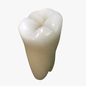 tooth lower molar wisdom 3d model