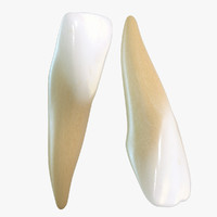 3d model teeth lateral incisors