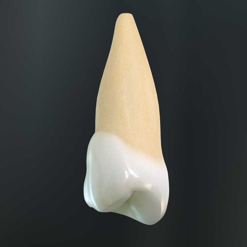 v4 0 5th tooth 3d model