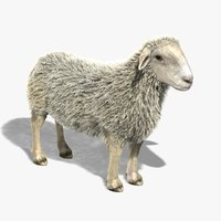 3d sheep fur