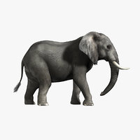 African Elephant (2)  (RIGGED)