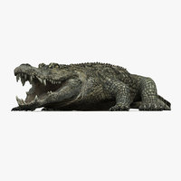3d model photorealistic crocodile