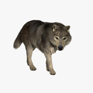 fur animation wolf 3d model