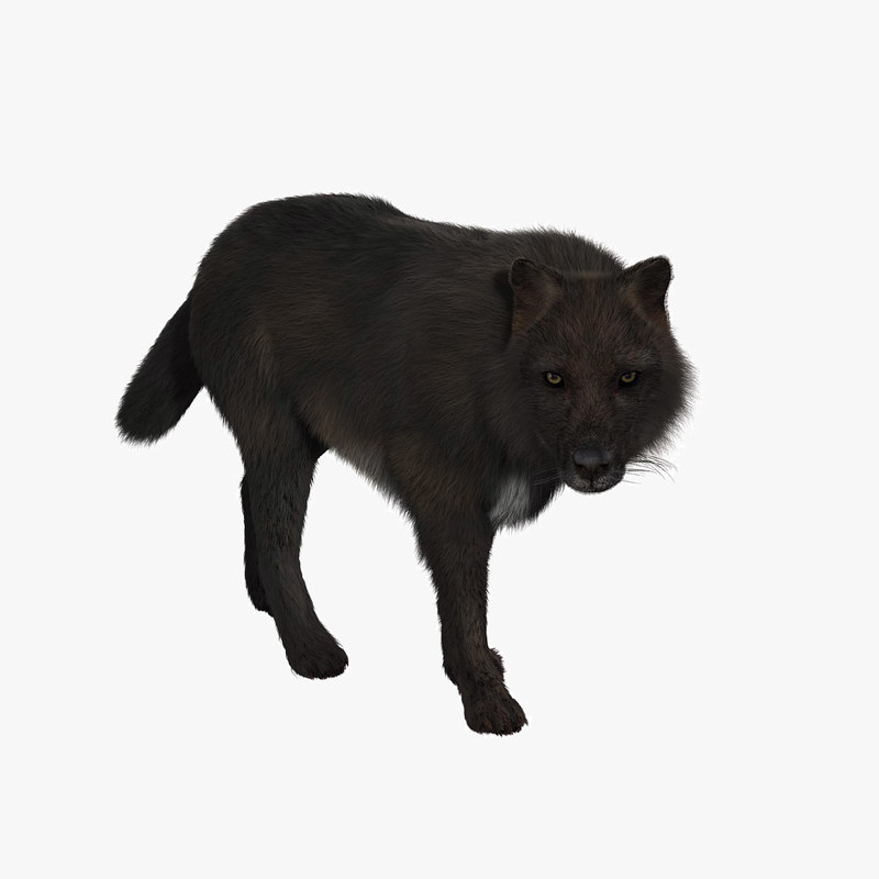 black fur animation wolf 3d ma