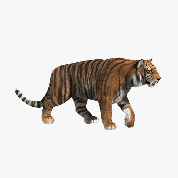 tiger fur animation 3d model